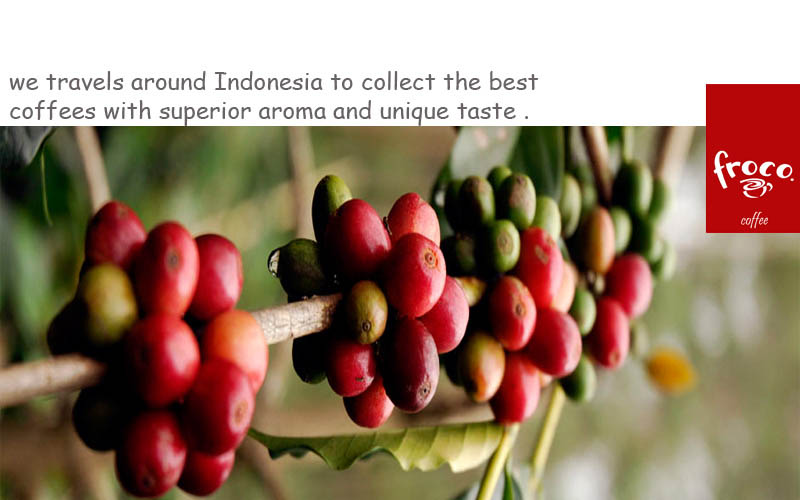 premium indonesian coffee